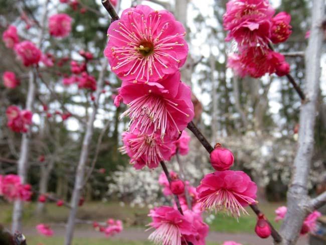 植物園 早春の草花展_e0048413_20472072.jpg