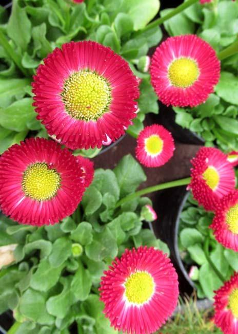 植物園 早春の草花展_e0048413_20472259.jpg