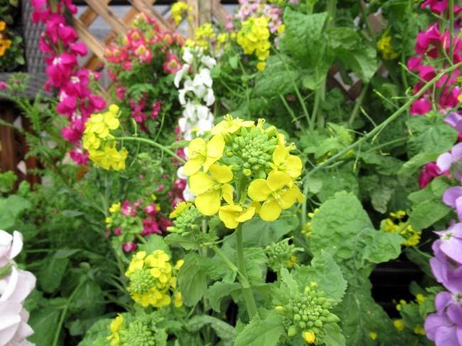 植物園 早春の草花展_e0048413_20472678.jpg