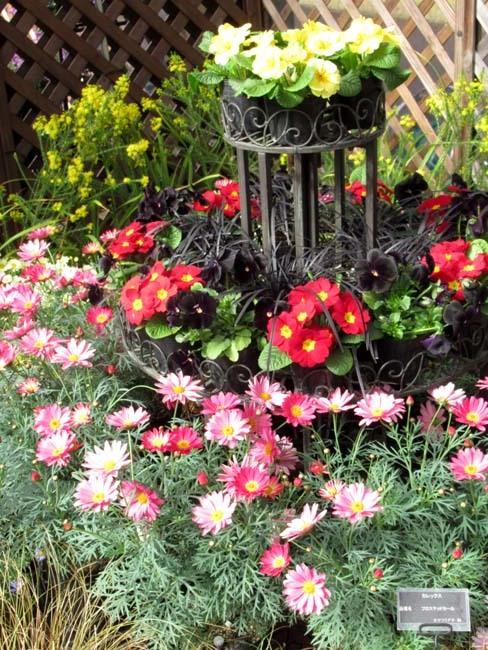 植物園 早春の草花展_e0048413_20472983.jpg
