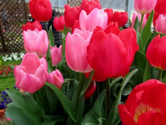植物園 早春の草花展_e0048413_20473754.jpg