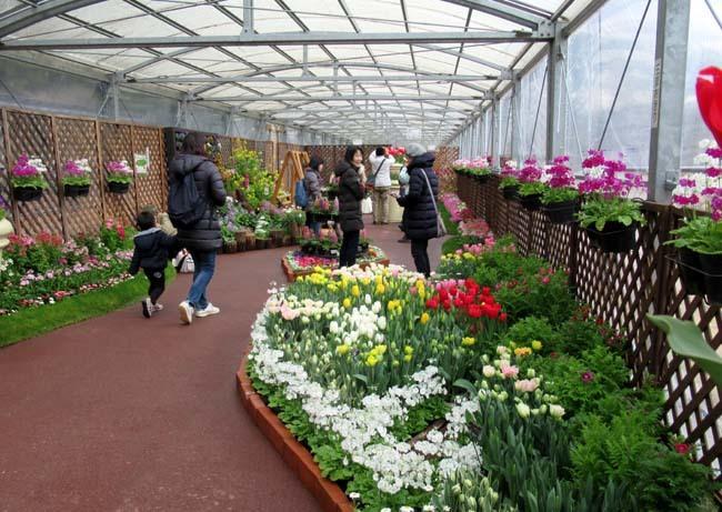 植物園 早春の草花展_e0048413_20474097.jpg
