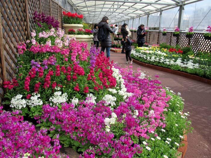 植物園 早春の草花展_e0048413_20474318.jpg