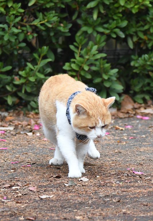 猫_e0097534_18420633.jpg