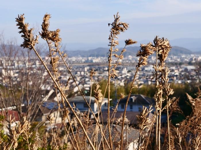 和歌山市六十谷(むそた)西ニュータウンからの風景  2019-02-14 00:00   _b0093754_22481654.jpg