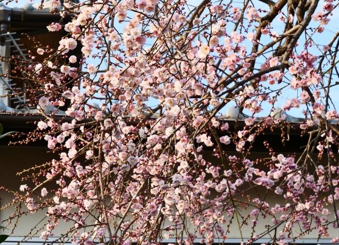 和歌山市六十谷(むそた)西ニュータウンからの風景  2019-02-14 00:00   _b0093754_22483749.jpg