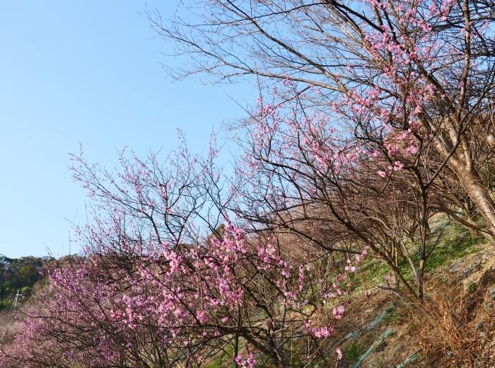 和歌山市六十谷(むそた)西ニュータウンからの風景  2019-02-14 00:00   _b0093754_22484865.jpg