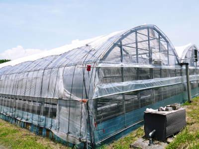 水耕栽培の生野菜を大好評販売中!さらなる高みを求め肥料改良!農薬や消毒を一切せずにてた各種生野菜です_a0254656_18295629.jpg