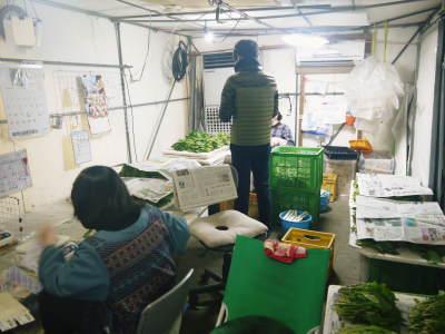 水耕栽培の生野菜を大好評販売中!さらなる高みを求め肥料改良!農薬や消毒を一切せずにてた各種生野菜です_a0254656_18321722.jpg