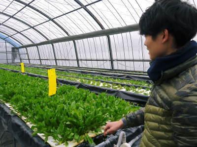 水耕栽培の生野菜を大好評販売中!さらなる高みを求め肥料改良!農薬や消毒を一切せずにてた各種生野菜です_a0254656_18462273.jpg