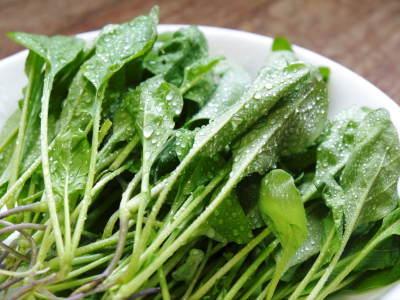 水耕栽培の生野菜を大好評販売中!さらなる高みを求め肥料改良!農薬や消毒を一切せずにてた各種生野菜です_a0254656_19082587.jpg