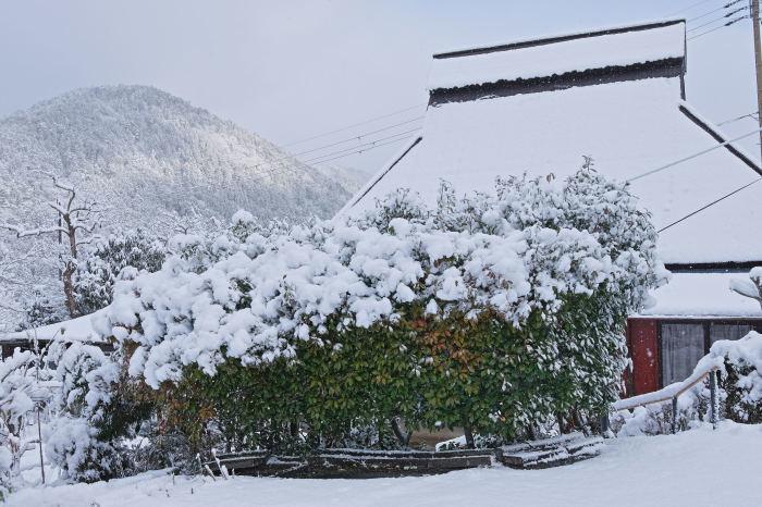 京都 大原雪景色 2019_f0021869_23431528.jpg
