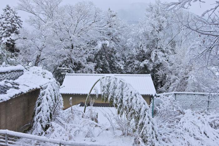 京都 大原雪景色 2019_f0021869_23432061.jpg