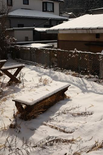 雪の翌朝_b0259218_05213475.jpg