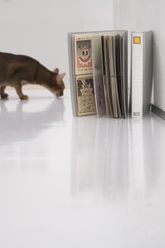 [猫的]ポストカードコレクション_e0090124_00104402.jpg