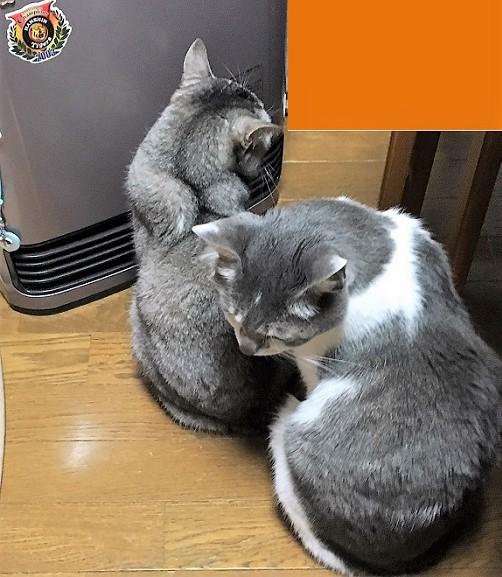 猫あるある?_f0002743_13312943.jpg
