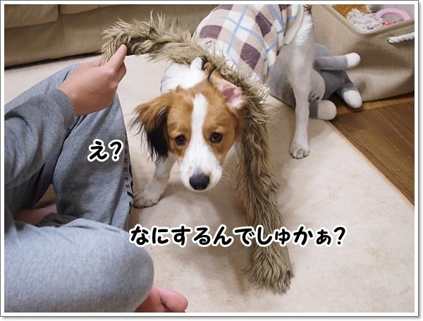 d0013149_00315576.jpg