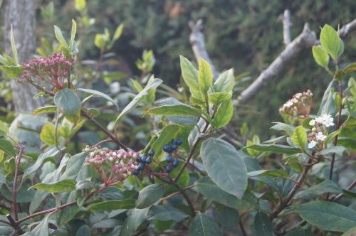 花も実も葉も_e0181373_21472257.jpg