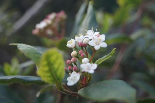 花も実も葉も_e0181373_21472635.jpg
