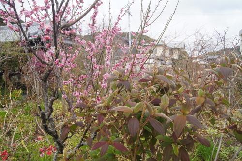 花も実も葉も_e0181373_21475324.jpg
