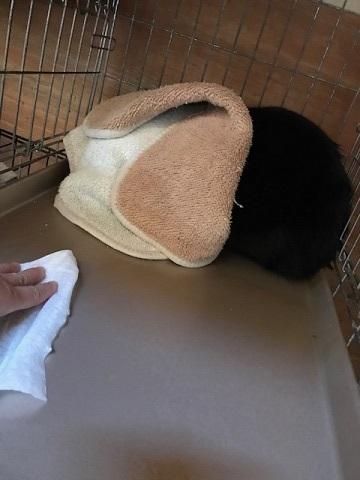 負傷収容のもう1匹の黒猫さん_f0242002_13195824.jpg