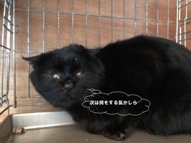 負傷収容のもう1匹の黒猫さん_f0242002_13200208.jpg