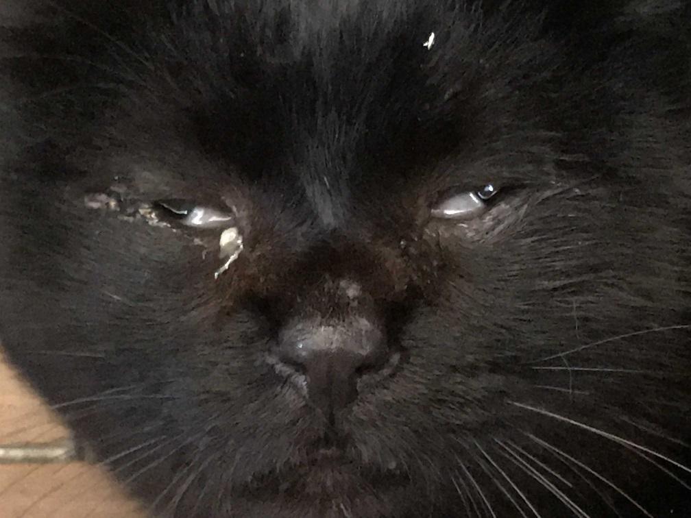 負傷収容のもう1匹の黒猫さん_f0242002_13200614.jpg