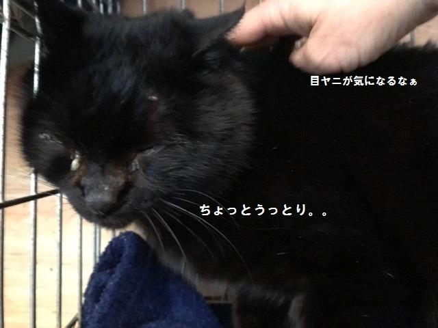 負傷収容のもう1匹の黒猫さん_f0242002_13204892.jpg