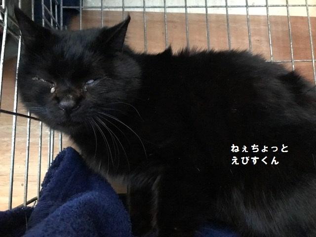 負傷収容のもう1匹の黒猫さん_f0242002_13205725.jpg