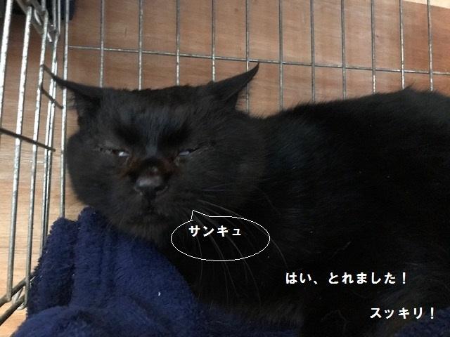 負傷収容のもう1匹の黒猫さん_f0242002_13210644.jpg