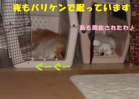 f0121712_00405005.jpg
