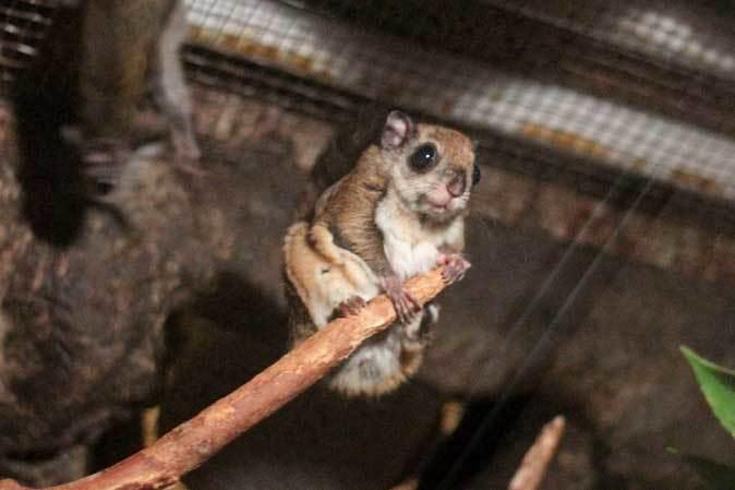 上野動物園・小獣館の動物たち~警戒ミーアキャットとツチブタ親子_b0355317_22220725.jpg