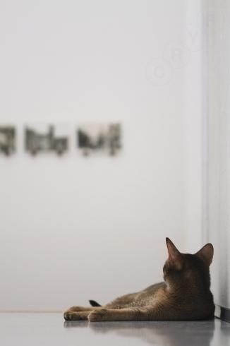 [猫的]鑑賞中_e0090124_22223045.jpg