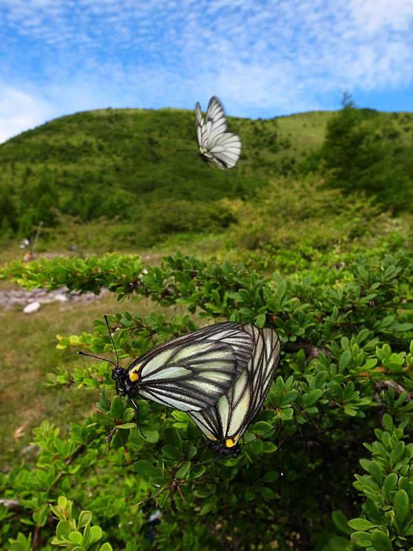 「第15回 チョウ類の保全を考える集い」_d0054625_23122107.jpg