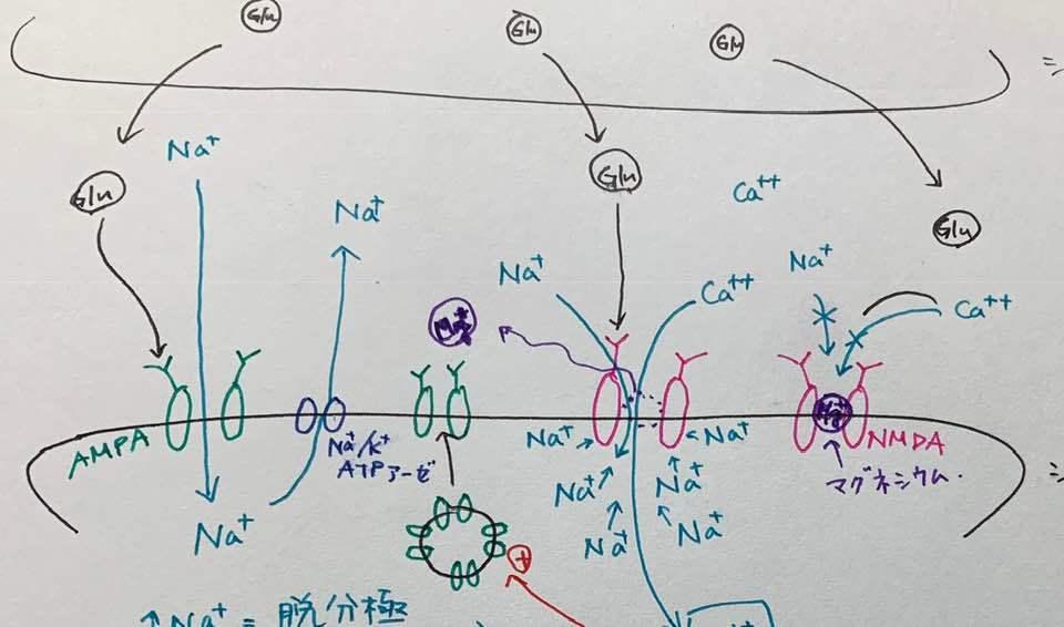 「脳化学入門」講座に学ぶ_c0113928_16174689.jpg