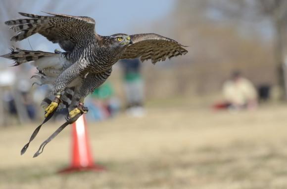 フライトフェスタ2019 競技ルール Flight Festa 2019 Competition Rule_c0132048_23162120.jpg