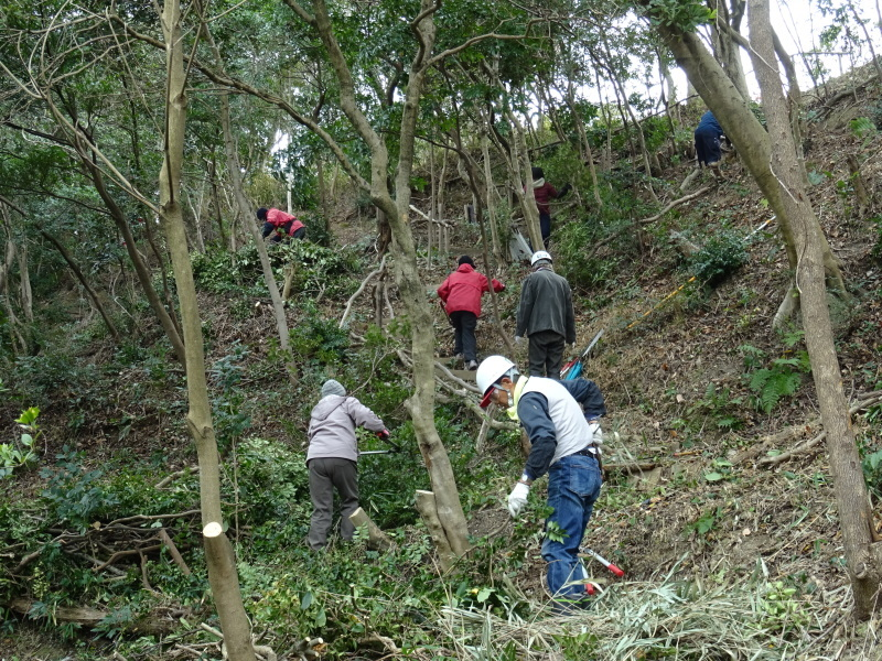 全員で楽しく間伐作業・・・うみべの森_c0108460_17022118.jpg