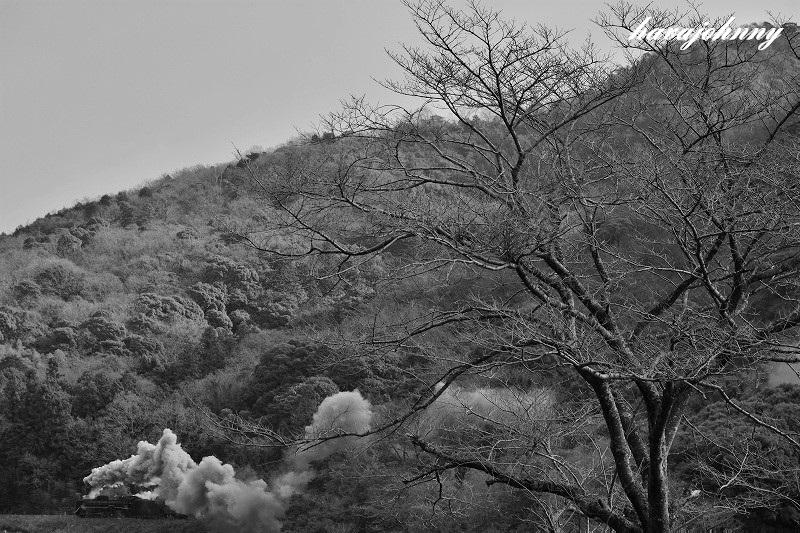 桜は未だかいな?_c0173762_19341667.jpg
