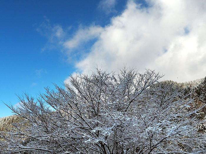 金剛山の樹氷 Ⅱ_e0254493_23291116.jpg