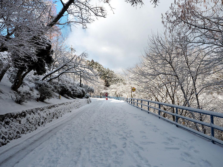 金剛山の樹氷 Ⅱ_e0254493_23293270.jpg