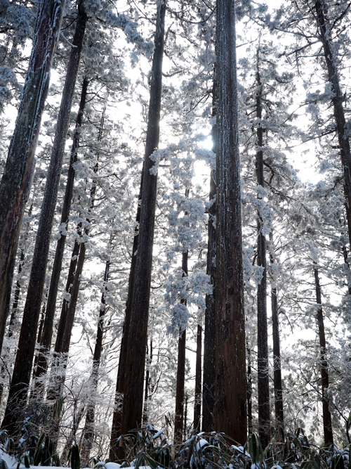 金剛山の樹氷 Ⅱ_e0254493_23313079.jpg