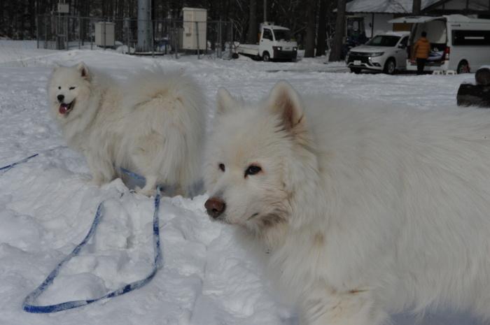 雪中キャンプ in一色の森キャンプ場 2_a0049296_18312124.jpg