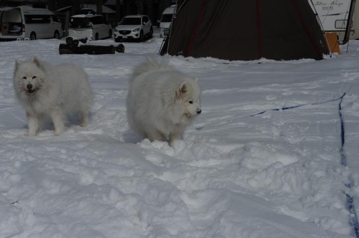 雪中キャンプ in一色の森キャンプ場 2_a0049296_18313181.jpg