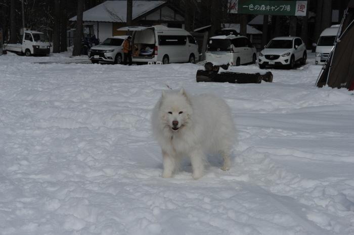 雪中キャンプ in一色の森キャンプ場 2_a0049296_18314364.jpg