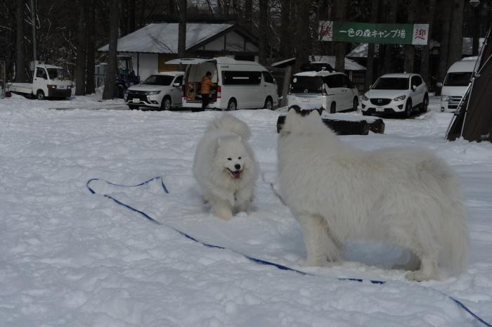 雪中キャンプ in一色の森キャンプ場 2_a0049296_18315545.jpg