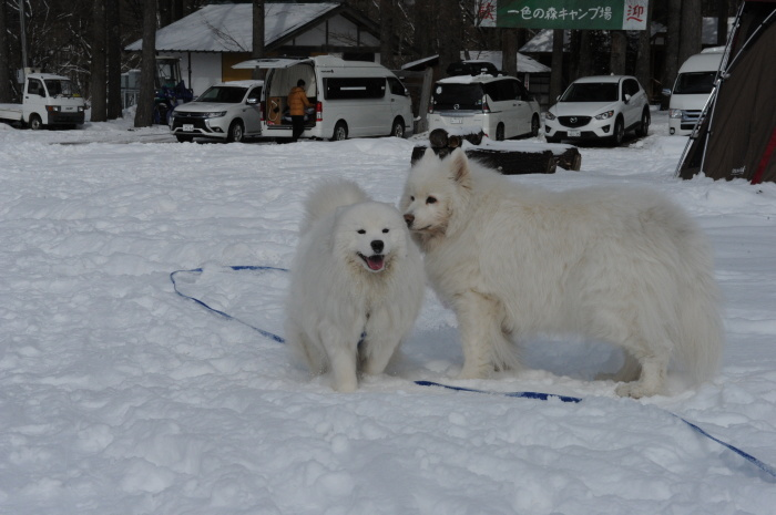 雪中キャンプ in一色の森キャンプ場 2_a0049296_18321090.jpg