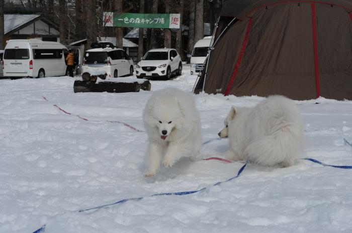 雪中キャンプ in一色の森キャンプ場 2_a0049296_18325104.jpg