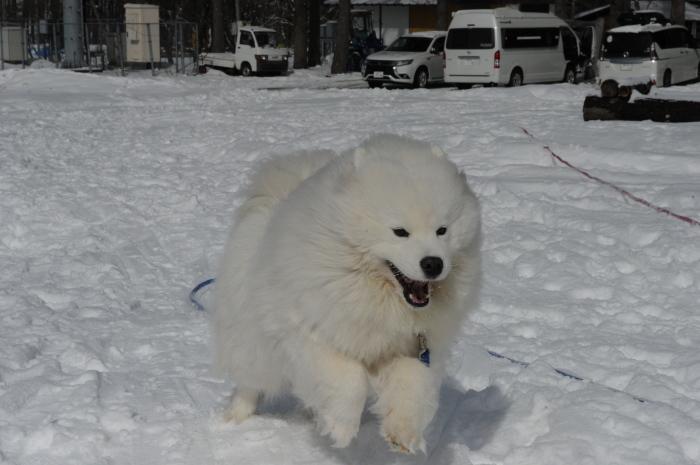 雪中キャンプ in一色の森キャンプ場 2_a0049296_18331855.jpg