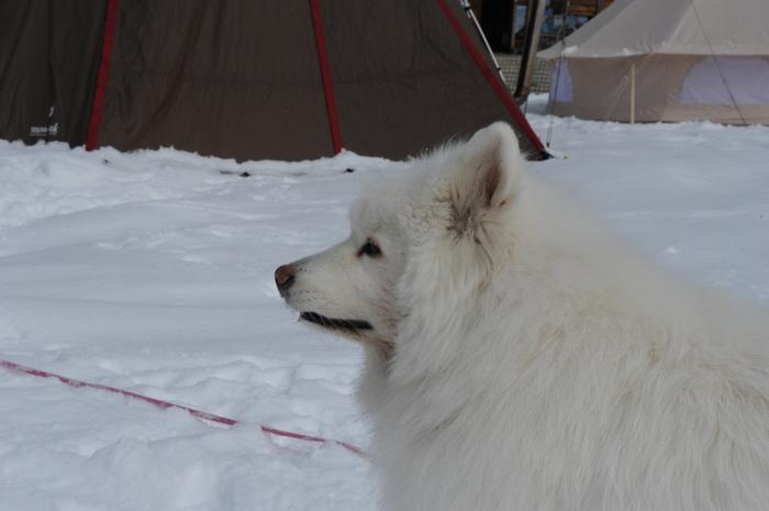雪中キャンプ in一色の森キャンプ場 2_a0049296_18333374.jpg