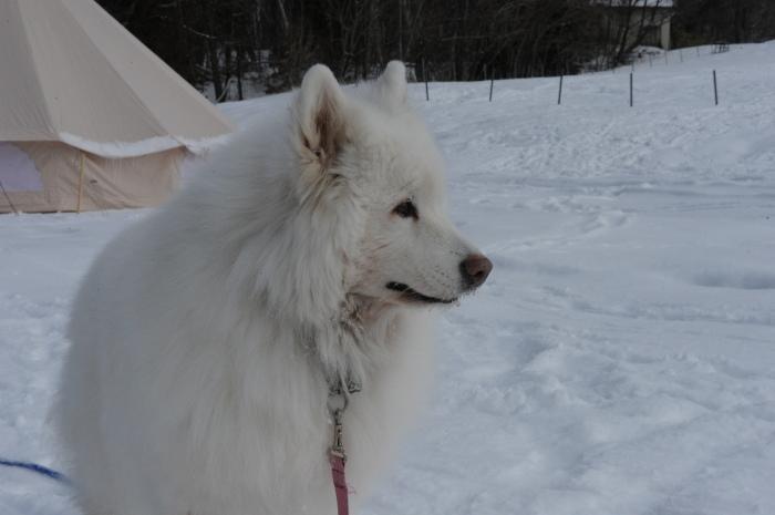 雪中キャンプ in一色の森キャンプ場 2_a0049296_18334402.jpg
